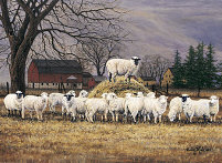 "image "" Wool Gathering "" by bonnie mohr"